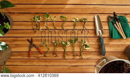 Wooden Table With Tools And Seedlings. Tools And Things For New Seedlings. Garden Concept. Bucket Of