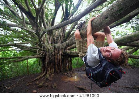 Banyan tree and hiker, Maui, Hawaii. Man hiking climbing giant Hawaiian Banyan tree on the Pipiwai Trail to Waimoku Falls around Haleakala National Park, Hawaii, Maui, USA