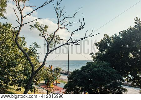 Tress On Seafront And Sky At Background In Istanbul, Turkey.