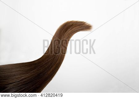 A Lock Of Long, Thick Hair. The Color Is Dark Brown. A Strand Of Natural Female Hair On A White Back