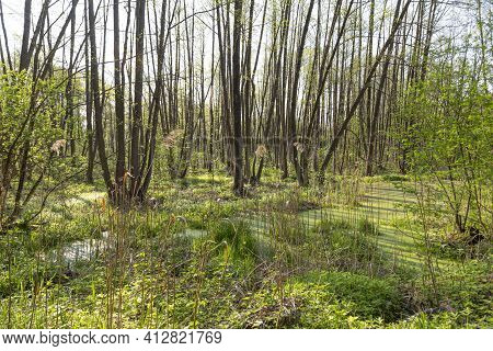 Summer Landscape With A Picturesque Swamp In The Forest. Marshy Terrain. The Ecosystem Of The Swamp.