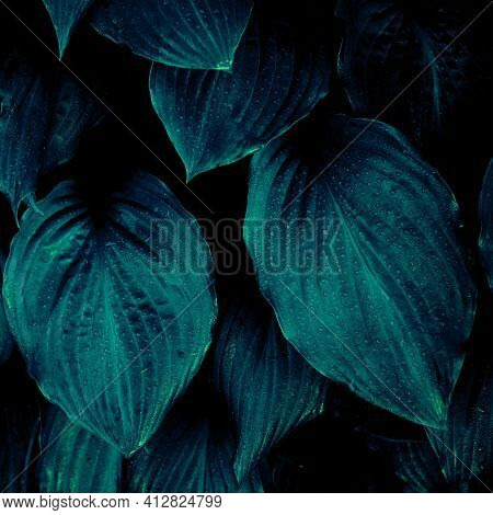 Close Up Of Beautiful Leaves Toned In Blue Tones