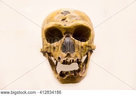 The Skull Of A Neanderthal With A Lower Jaw (latin: Homo Neanderthalensis) Is Isolated On A White Ba