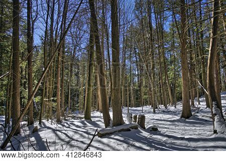 The Forest With Back-lit Sunlight In Winter.