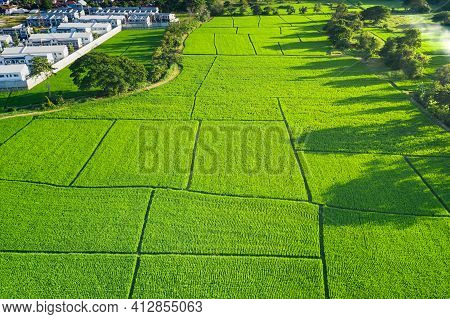 Land Plot In Aerial View. Include Landscape, Green Field, Crop, Agricultural Plant. Tract Of Land Fo