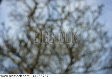 Blurry Tree Branches And Blue Sky. Blurry Natural Images For Backgrounds, Design Materials And Writi