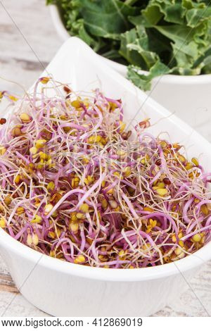 Nutritious Kale Sprouts As Source Natural Vitamins And Minerals. Healthy Nutrition