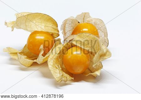 Three Physalis With Shells On White Background