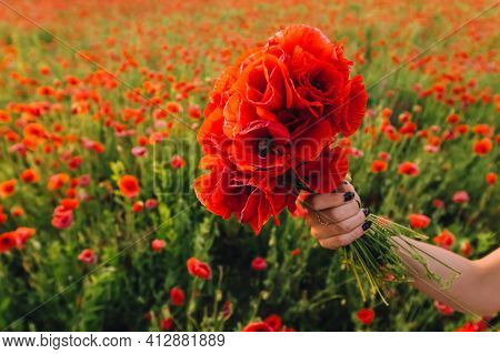 Bouquet Of Red Poppy In The Hands Of A Girl. Walk In The Poppy Field. Woman Walking On The Poppy Fie