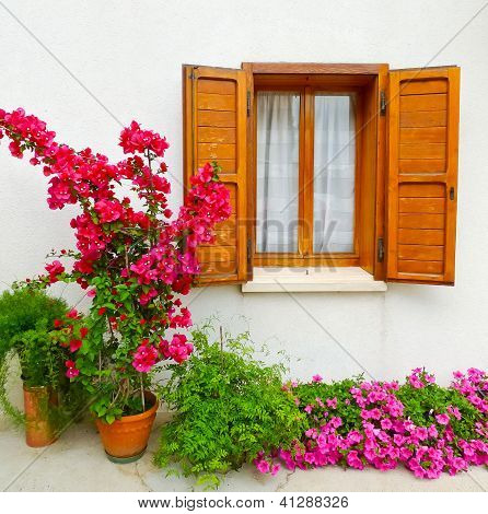 Bouganville And Window