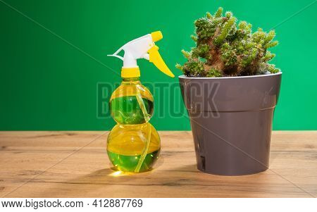 Air Freshening Fabric Softener Spray Bottle. Spraying Water On Indoor Plants, Green Cactus. Spray Bo