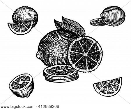 Lime, Vector Illustration. Vintage Graphics And Handwork. Drawing With An Ink Pen And Pencil. The Li