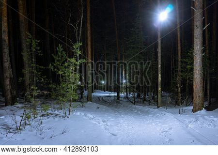Illuminated Path In The Winter Coniferous Forest. Winter Park At Night. Deep Footprints In The Snow.