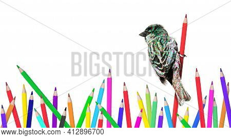 Isolated Sparrow In Wood Op Pencils, Sparrow With Spots Of Coloring Pencils, On White