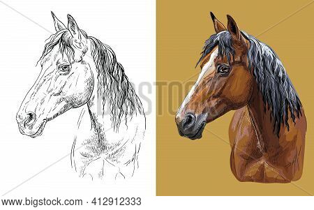 Realistic Head Of Young Bay Horse. Vector Black And White And Colorful Isolated Illustration Of Hors
