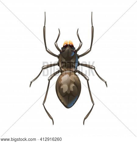 Home Spider, Macro Of Insect. Vector Illustration