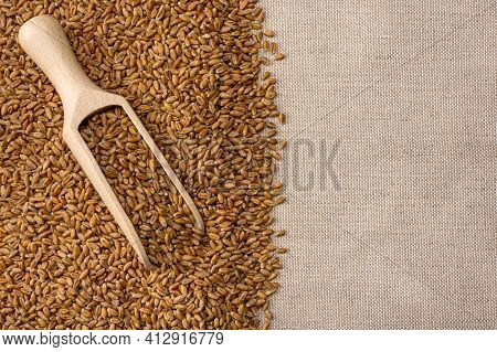 Wheat Grains. Wheat Grains In Wooden Scoop On Burlap Background. Harvest, Cereal Grains, Wooden Spoo