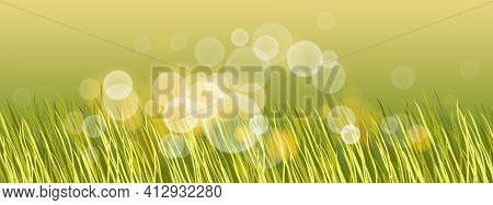 Beautiful Green Grass With Bokeh Blurred Lights Of Dew On It Vector Illustration, Morning Sunlight,