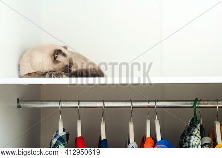 Cat Sleeping In The Wardrobe. House Pet, Lifestyle. Pet Sleeps On The Shelf In White Closet.
