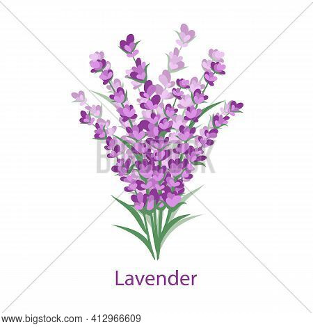 Lavender Bouquet Isolated On A White Background With The Inscription Lavender. Vector Illustration