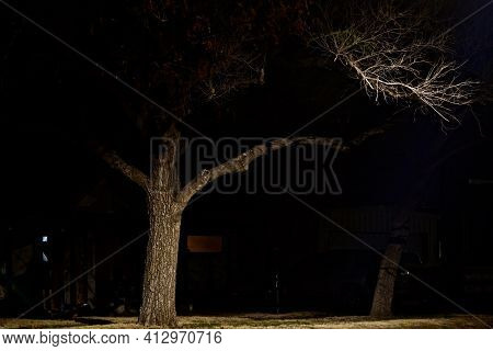 Night Photograph Of Old Growth Elm Tree On The Corner With Large Security Light, Canyon, Texas.   Ph