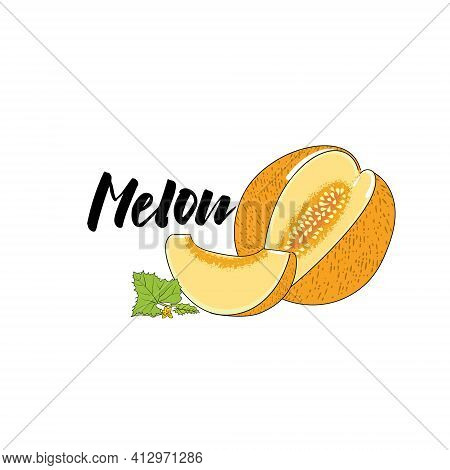 Vector Simple Isolated Image Of A Melon, Whole And Lobes. An Illustration Of A Melon In A Dashed Ske
