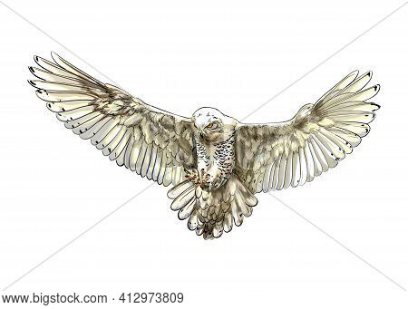 Long-eared Owl, Eagle Owl, Polar Owl In Flight From A Splash Of Watercolor, Colored Drawing, Realist