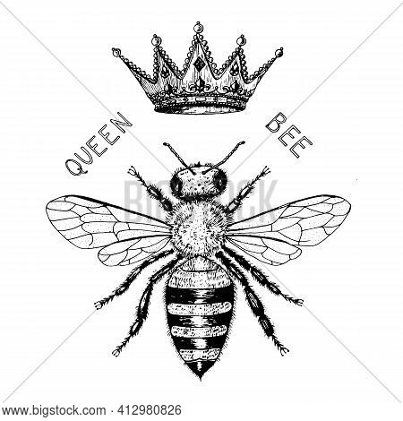 Bee And Honey Logo. Mead And Insect And Floral And Beekeeping. Honeycomb And Hive Vector Engraved Ha