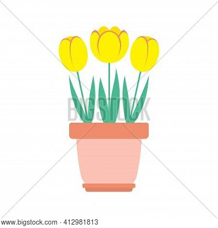 Vector Illustration Of Tulips Flowers In Pot With Leaves Isolated On White Background, Cartoon Sprin