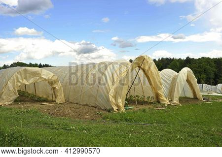 Plastic Greenhouse Or Foil Greenhouse In Agriculture