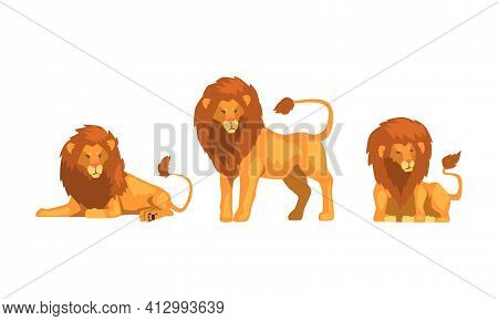 Proud Powerful Lion Character As King Of Animal With Brown Mane Vector Set