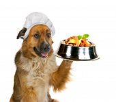 Cute big golden crossbred dog in a cap serving up a gourmet meal holding up a stainless steel dog dish balanced on its paw loaded with biscuits and tasty titbits isolated on white poster