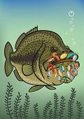 Bass is very strong fish. Its hard to catch poster