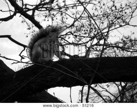 This  is a squirrel in a tree. poster