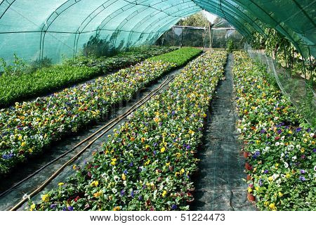 Flowers production
