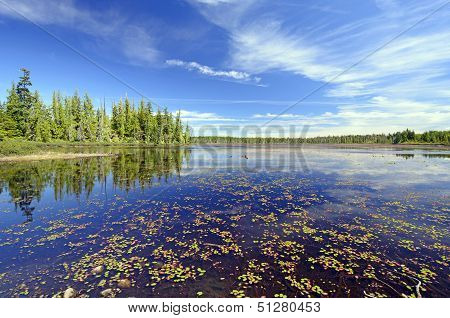 Quiet Wetland Pond On A Summer Day