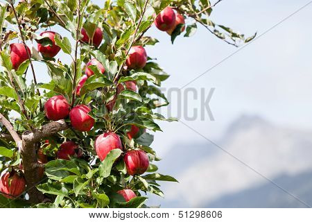 Apple Tree Over Mountain Landscape