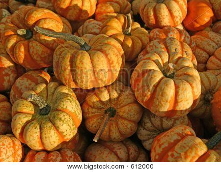 Tiger Pumpkins