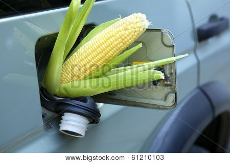Corn sticking out of gas tank