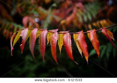 Autumnal Leaves On A Tree