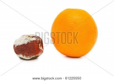 Putrefaction Orange