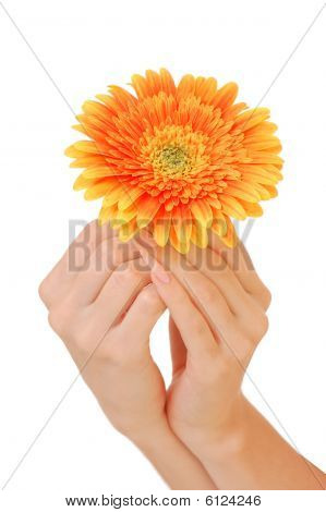 Woman Hand With Beautiful Flower