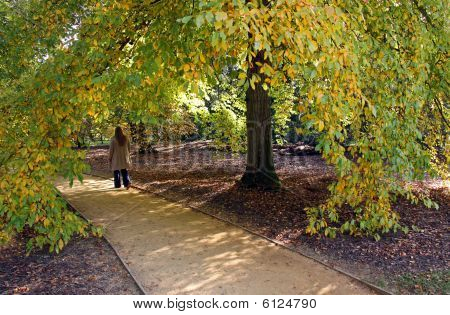 Lady walking down a path under a tree