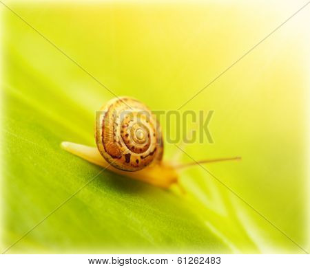 Image of cute little snail on fresh green leaf in the park in sunny day, wild nature, flora and fauna, small mollusk with helix house, gastropod insect slow crawling on the grass, wildlife in forest