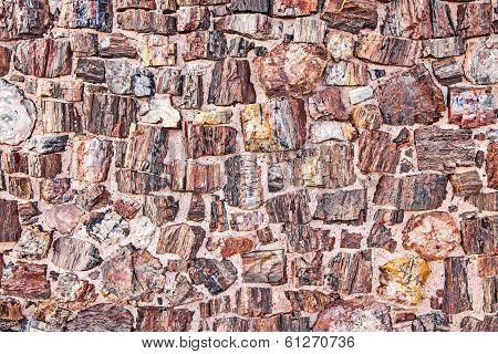 Petrified Tree Texture Looking Like Stones.