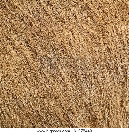 Beige Pony Textured Hair