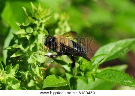 Bumblebee Garden