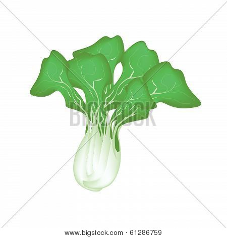 Fresh Green Bok Choy On A White Background