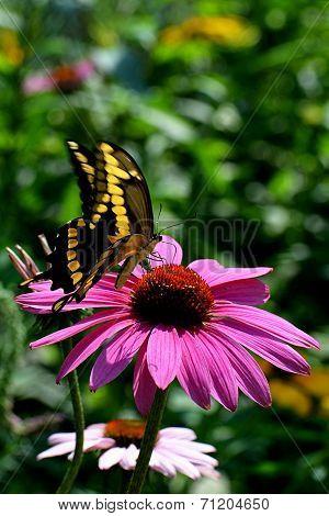 Butterfly Alit on flower