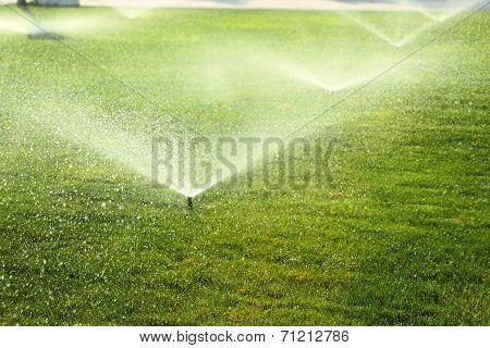 garden sprinkler on the green lawn
